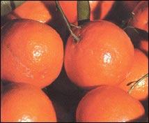 Tartaleta de naranja